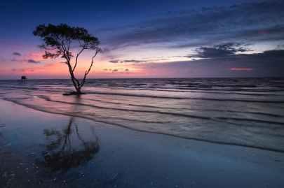 tree near body of water